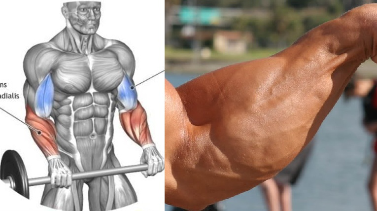 The four finest workout routines for enormous forearms