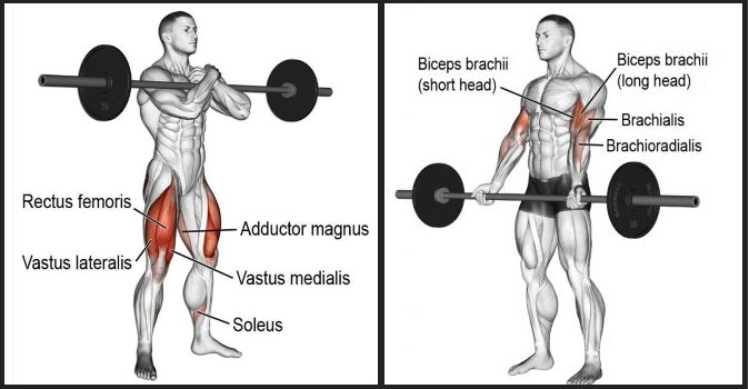 The Full Body Barbell Workout Fitness And Power